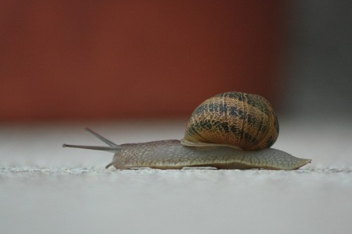 snail-368763_1280 Why slow change is better than fast change: Photo of a snail